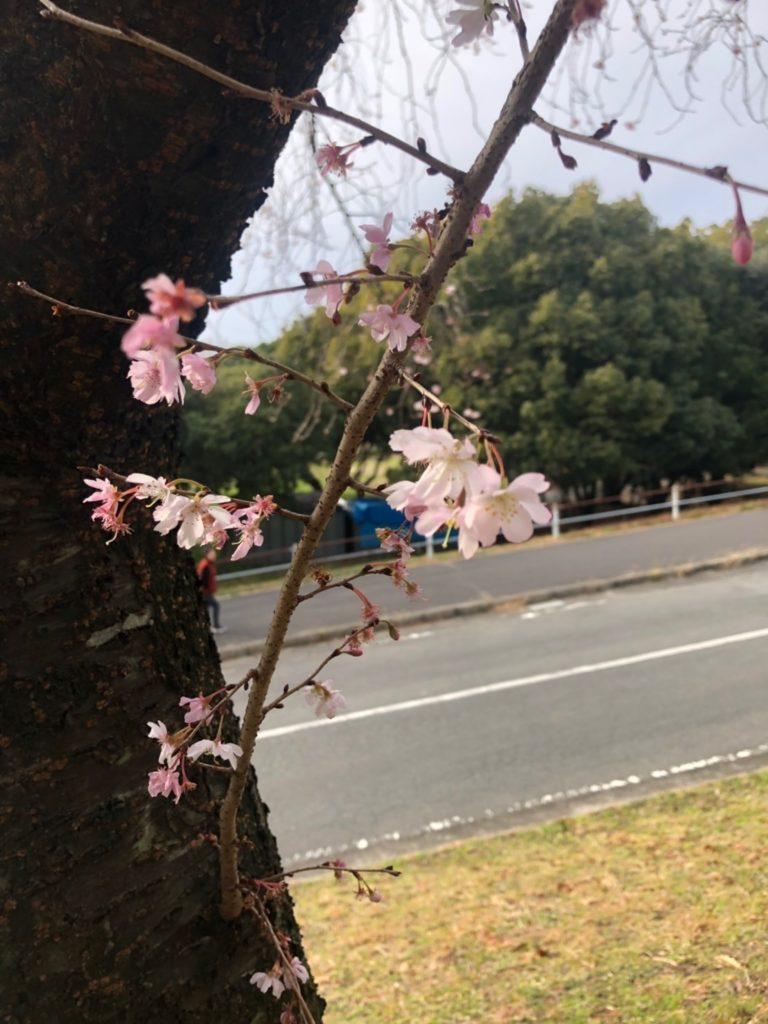 春みつけた🌸